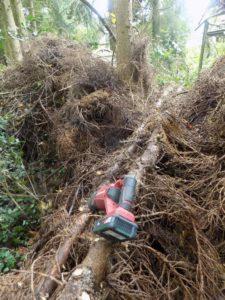 Baumarbeiten-2021